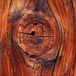 Защита древесины от грибка